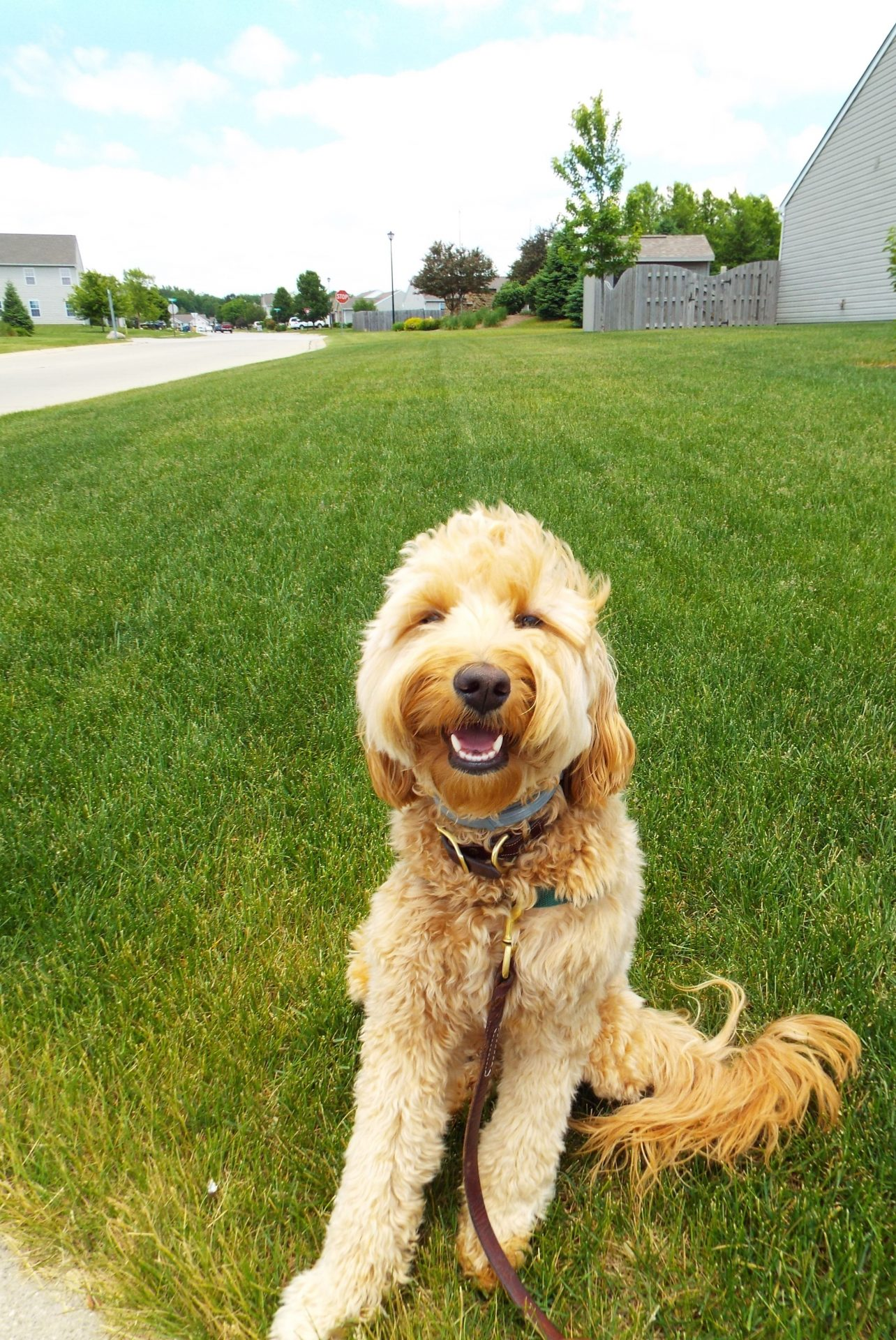 Pawsitive Pets | Force-Free Pet Care | West Lafayette, IN